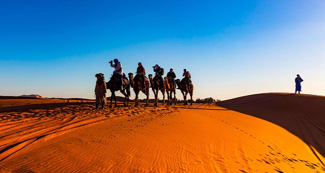 cammelli nel deserto in Marocco